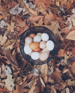 healthy food protein eggs