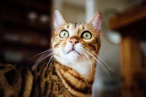 tired surprised cat