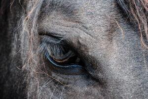 sadness within - horse
